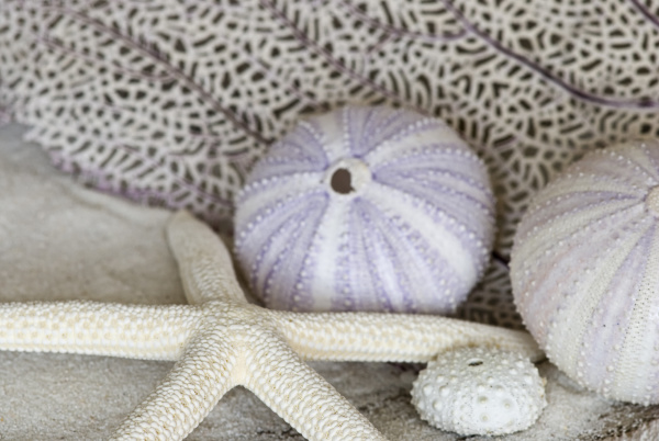 maritime still life with sea urchin