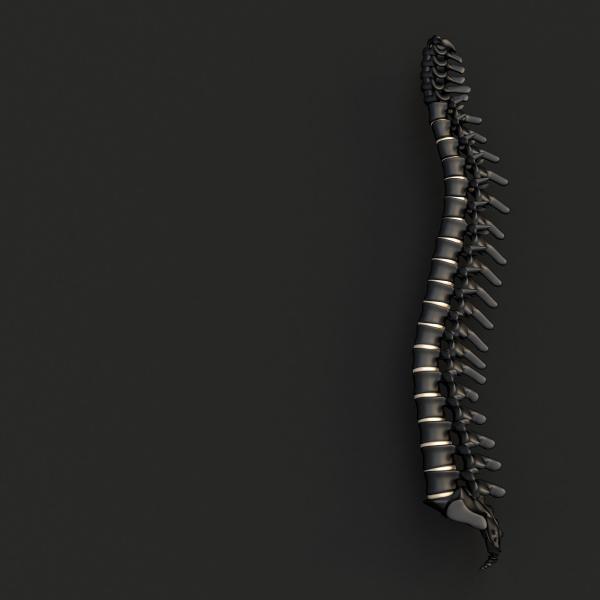black and gold backbone on a