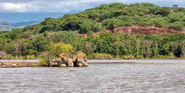 lake chamo landscape ethiopia africa
