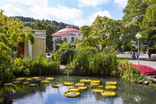 slovakia piestany spa piestany water lilies