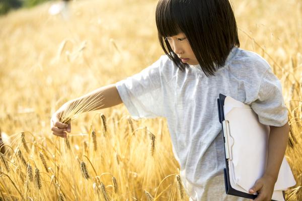 little girl examining wheat in field