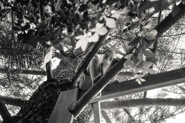 portrait boy climbing tree