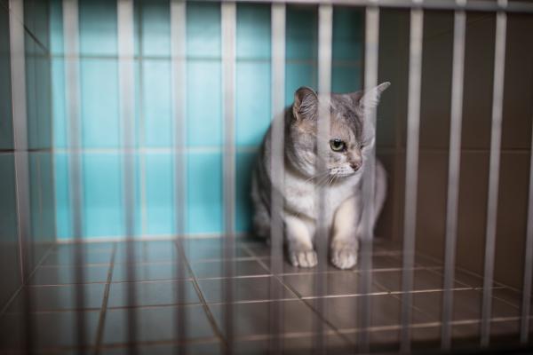 sick scared cat waiting