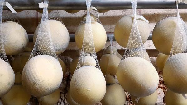 italian cheese caciocavallo aged in cave