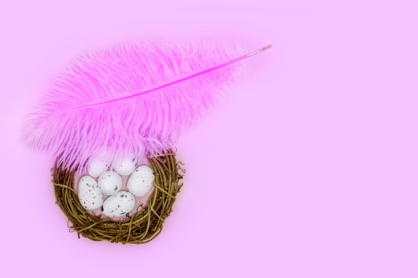 pink feather shelters a nest with