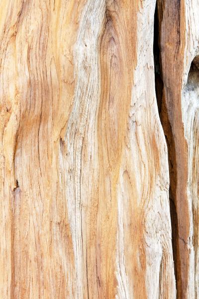 rough stump wood
