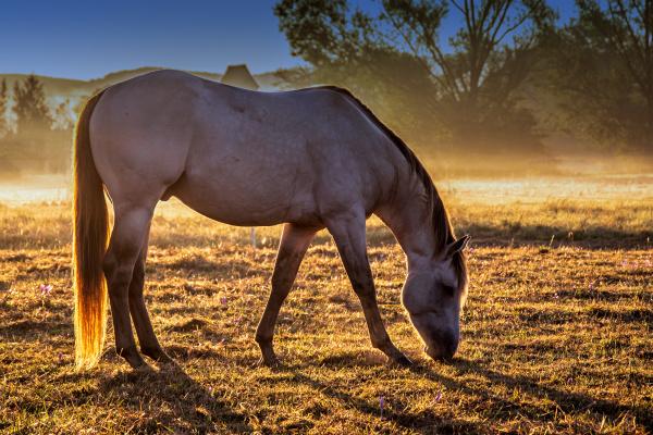 sunrise with horse
