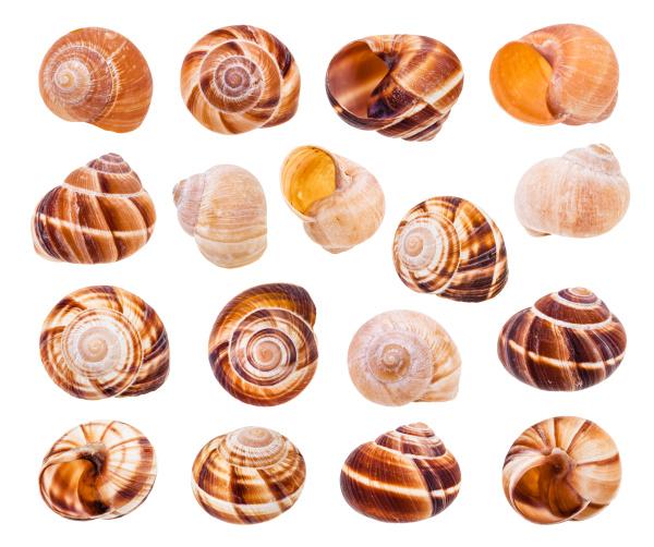 set of various shells of roman