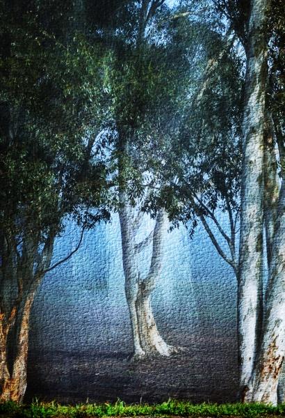 close up of blue gum trees