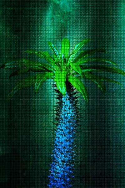 close up of a madagascar palm