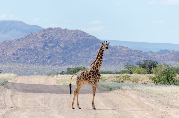 giraffe standing in the middle of