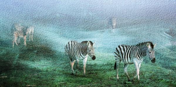 close up of zebras on a