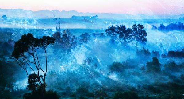 landscape with morning fog over eucalyptus
