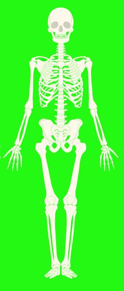 skeleton full body white bones green