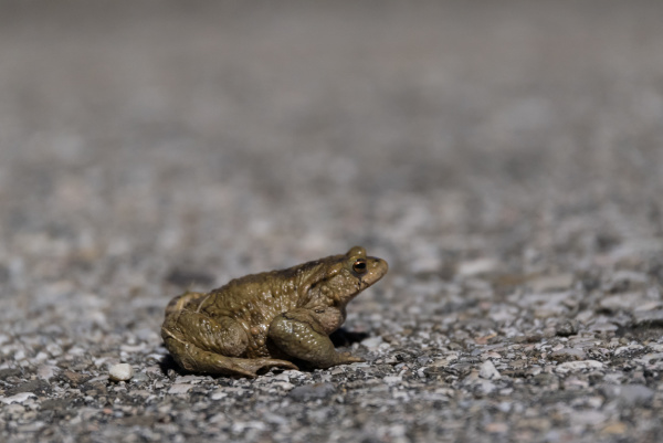 low angle toad