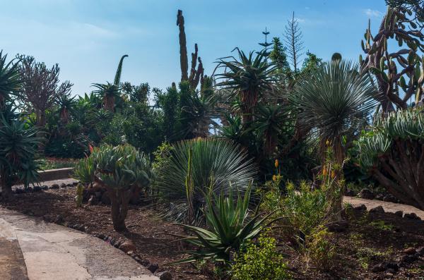 tropical botanical garden in funchal city