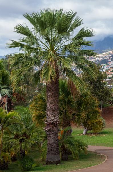 botanical garden monte