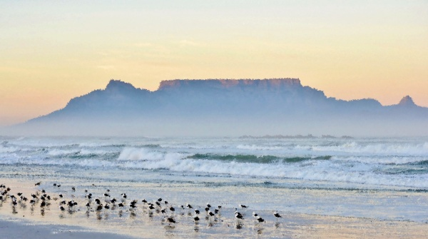 landscape, with, seagulls, on, the, beach - 28215159