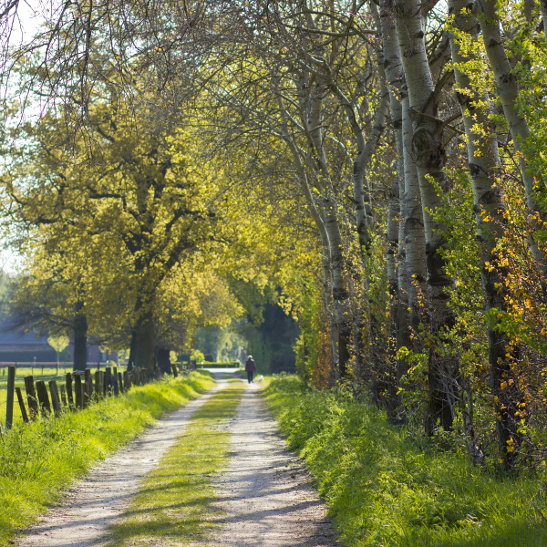 forest, road, -, landscape, , germany - 28217759