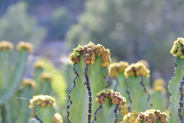 a cactus in bloom in the