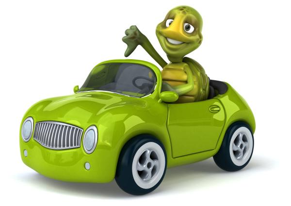fun, turtle - 28218094