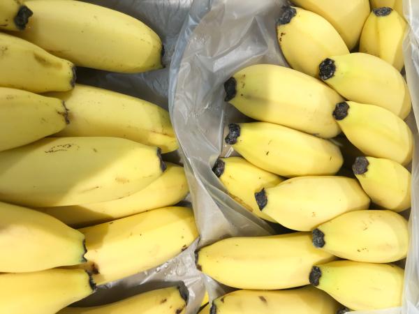 close up of ripe bananas healthy