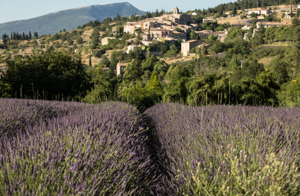 a, lavender, field, with, the, village - 28238595