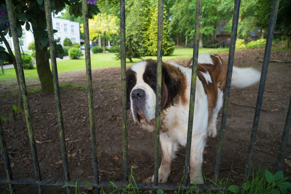 dog, behind, a, fence - 28238724