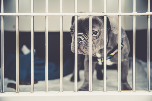 dog, in, a, cage, in, a - 28238052
