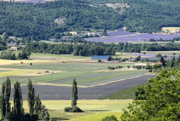 patchwork, of, farmer's, fields, in, valley - 28238920