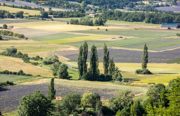 patchwork, of, farmer, s, fields, in - 28238919