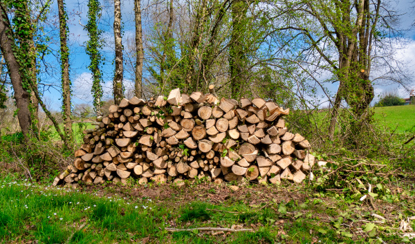 stack, of, wood, in, forest., close - 28238137