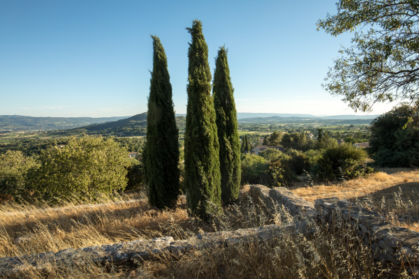 three, cypresses, in, , in, saint - 28238546