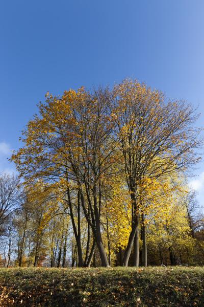 autumn, yellow, foliage - 28239802