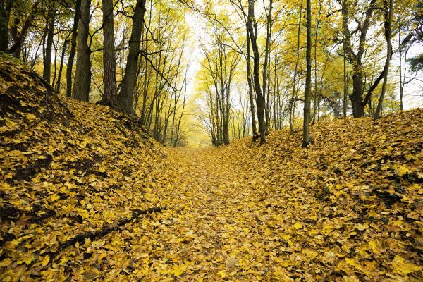 dull, weather, in, the, autumn, season - 28239440