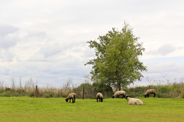 flock, of, sheep, on, lonely, countryside - 28239932