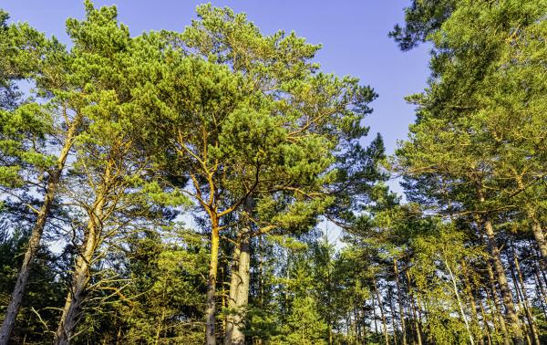 polish, wild, forest, -, kampinos, national - 28239736