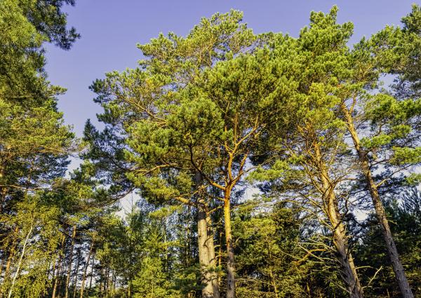 polish, wild, forest, -, slowinski, national - 28239545