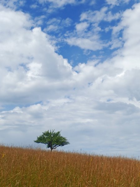 field, with, a, tree - 28240289
