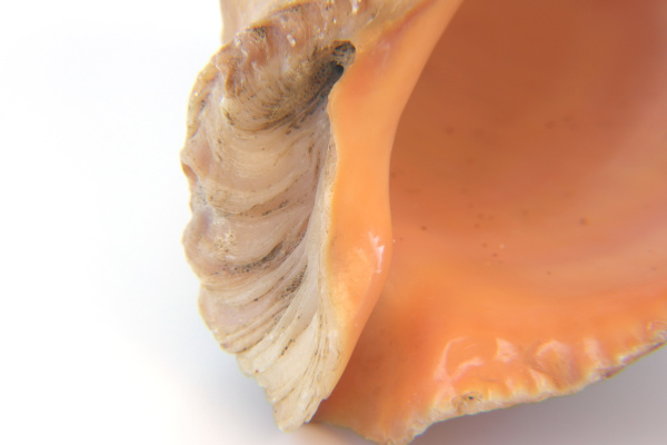 sea shell macro view texture
