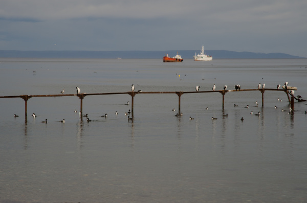 jetty with imperial shags and ships