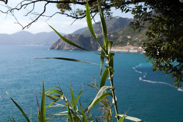 cinque, terre, coast, between, manarola, and - 28258580