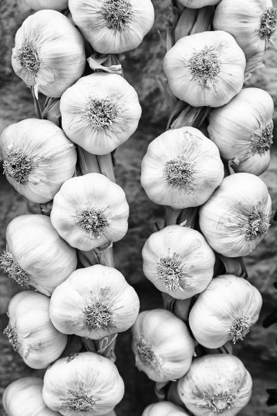fresh garlic spanish