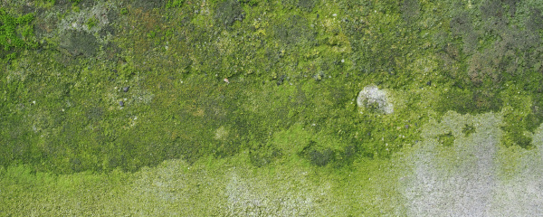 wide weathered concrete wall with green