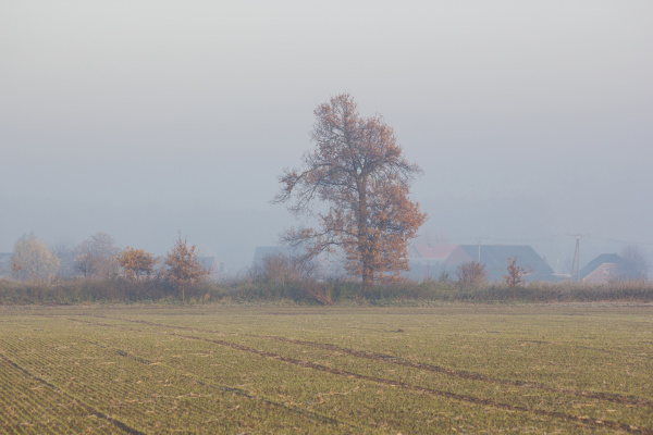 autumn field with trees foggy