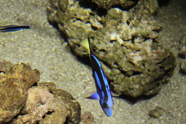 fish in sea water beautiful
