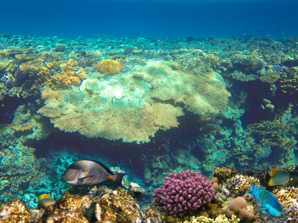 underwater, world., coral, fishes, of, red - 28353243
