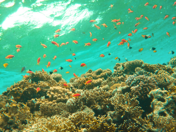 underwater, world., coral, fishes, of, red - 28353267