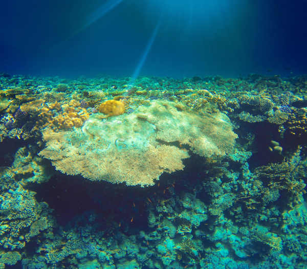underwater, world., coral, fishes, of, red - 28353268