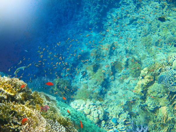 underwater, world., coral, fishes, of, red - 28354792